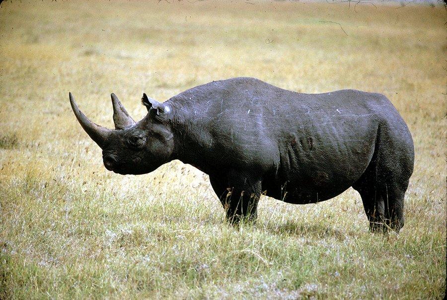 Животные, которые больше не существуют (ФОТО)