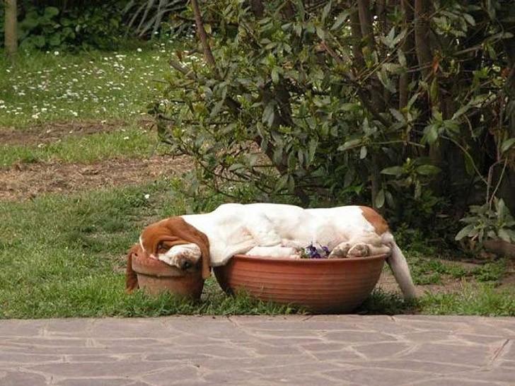 30 собак в самых невообразимых позах во сне (ФОТО)