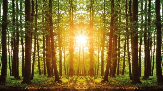 В Украине начинается обновление руководства лесного хозяйства в большинстве областей