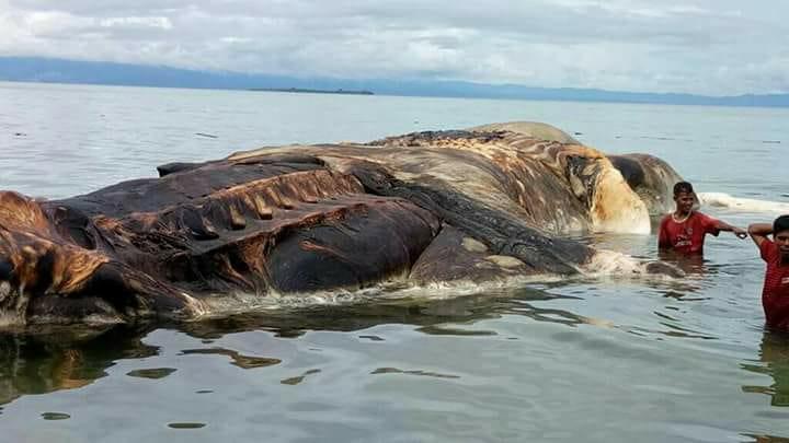 Ученые раскрыли тайну загадочного морского чудовища в Индонезии