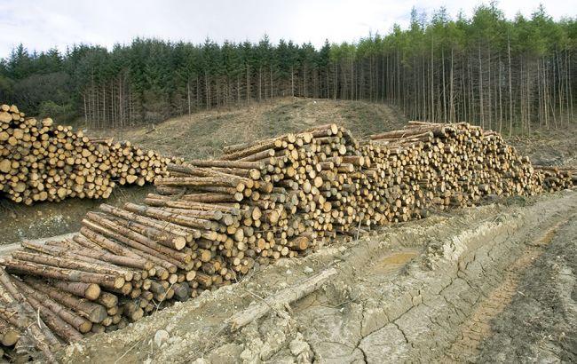 Юшкевич рассказала о стратегии реформирования лесного хозяйства Украины