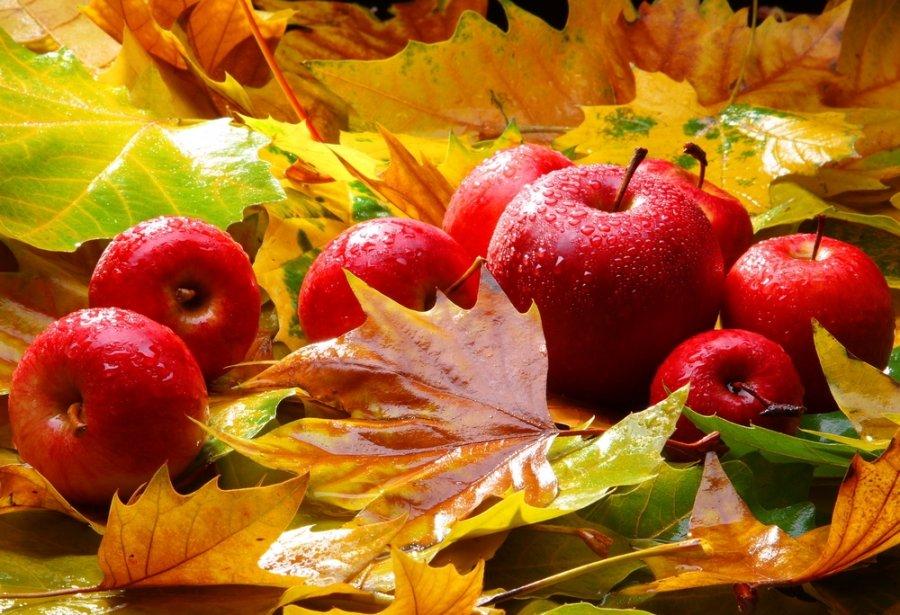 В Украине снижаются цены на осенние сорта яблок