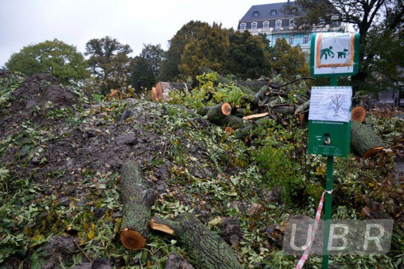 На Пейзажной аллее в Киеве вырубили деревья