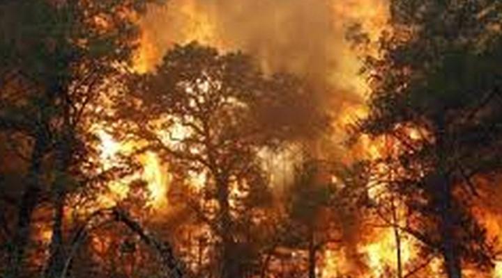 Почему в Украине пожары «тушат» сами себя