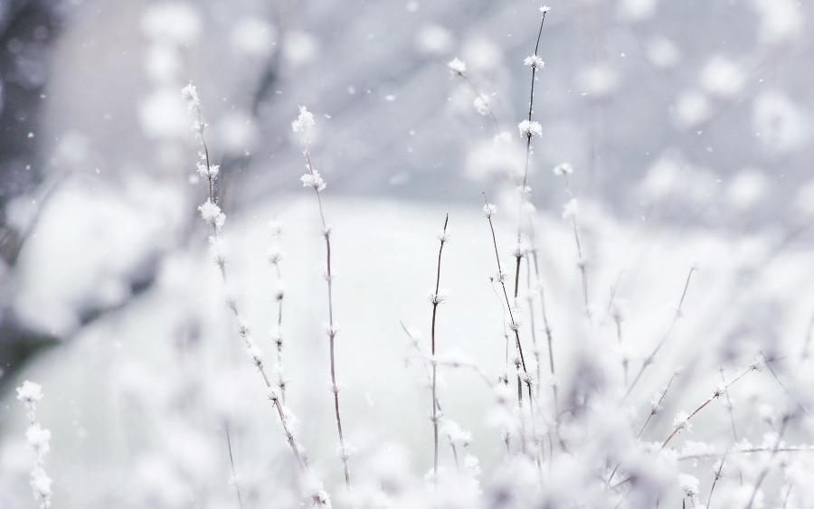 В Украине в ближайшие дни прогнозируют метели и мокрый снег