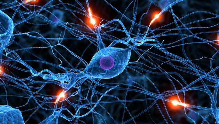 Терапия стволовыми клетками помогла бороться с симптомами старения