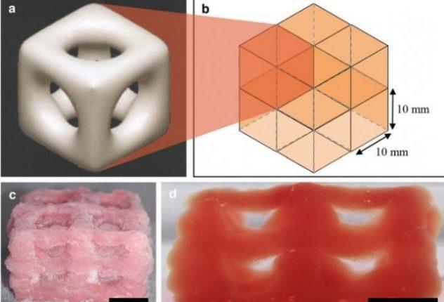 3D-принтер впервые напечатал мягкие ткани с помощью «быстрой заморозки»