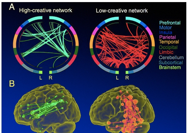 Ученые обнаружили нейронные связи креативного мышления