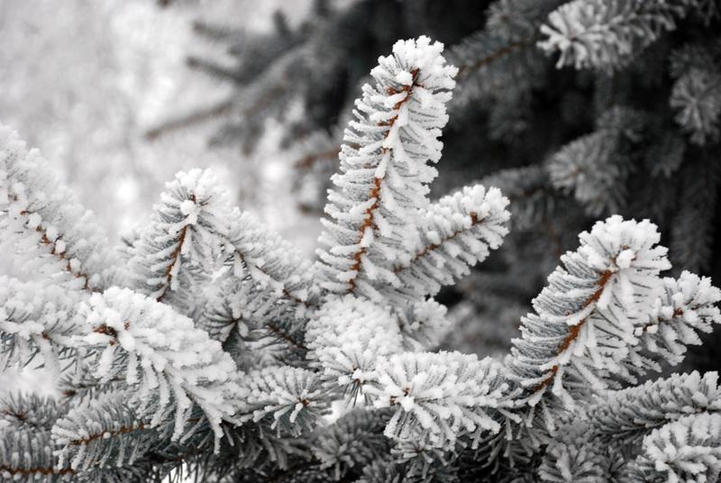 В Украине сегодня морозная погода