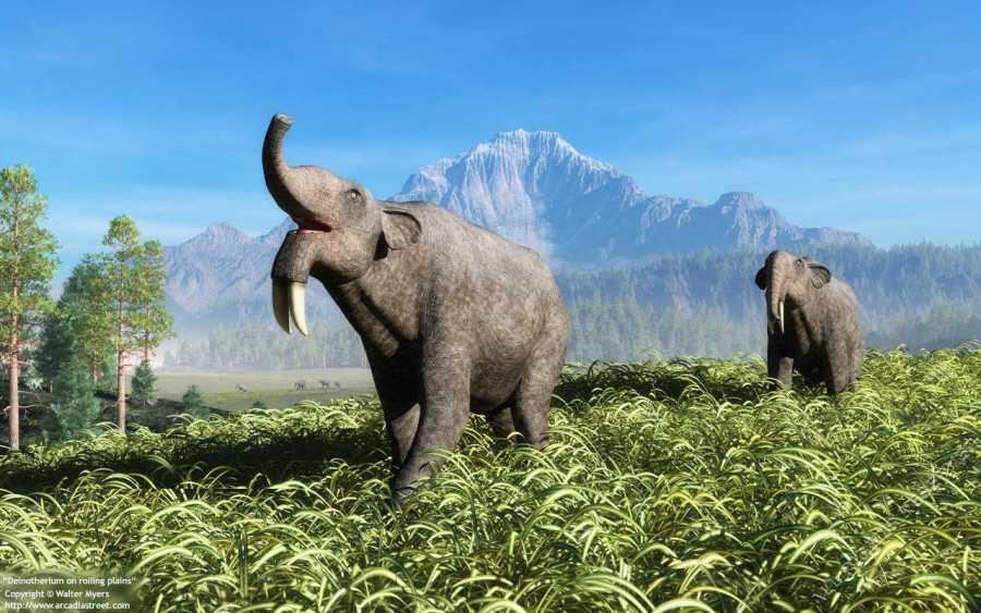 Ученые нашли сухопутное млекопитающее «идеальных» размеров
