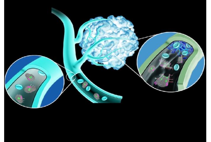Китайские нанороботы способны находить опухоль и перекрывать ей кислород