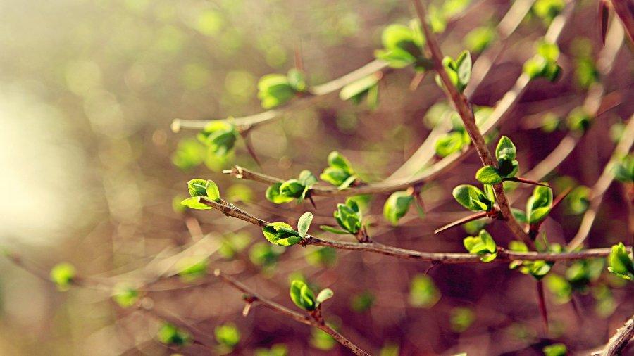 Синоптики рассказали, когда в Украину придет весна
