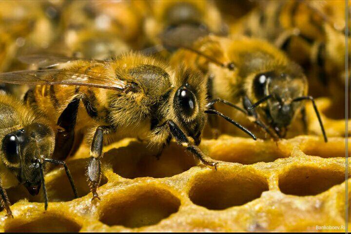 Евросоюз официально признал вред популярных пестицидов