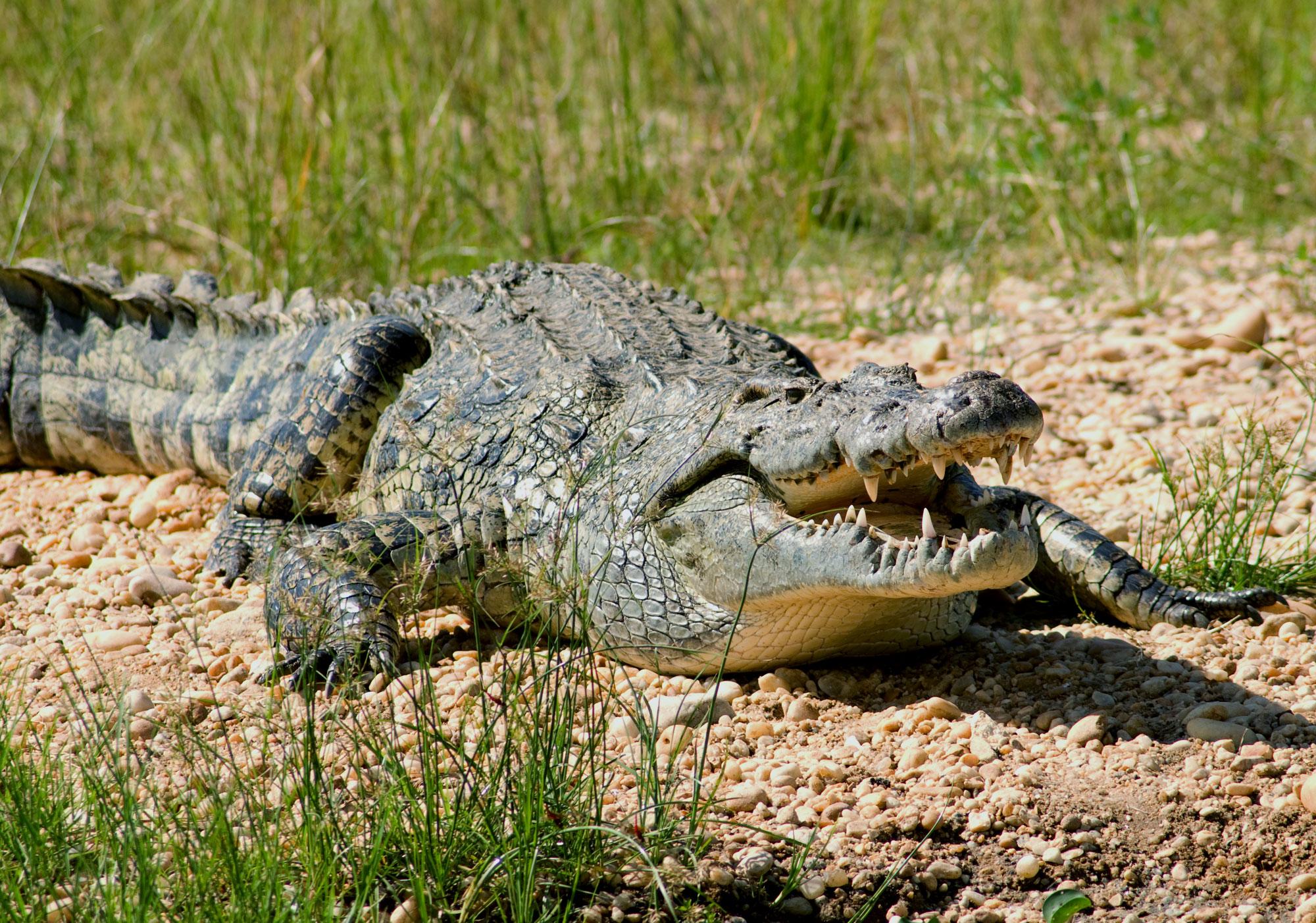 Специально обученные крокодилы будут охранять границу Украины на Дунае, — Геращенко