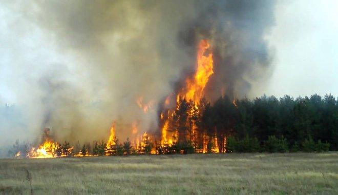 В Укргидрометцентре предупредили украинцев о сильном ветре и пожарной опасности