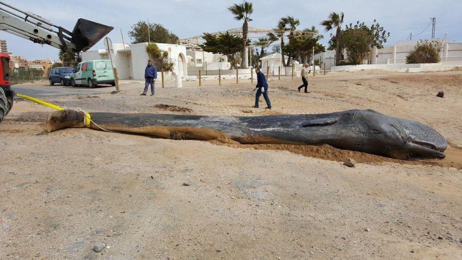 В желудке мертвого кита обнаружили 29 килограмм пластика