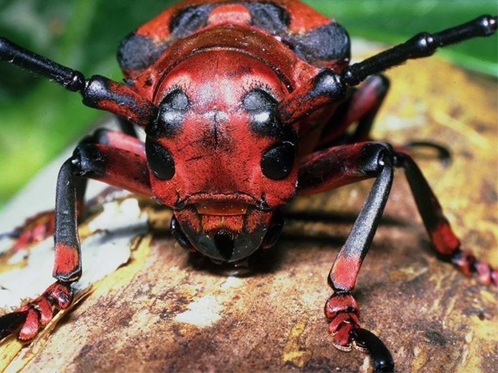 Украина может лишиться лесов из-за нашествия насекомых-вредителей