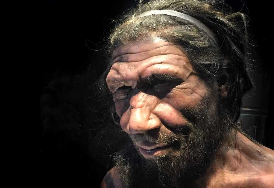 Ученые «воскресят» мозг неандертальцев в ближайшие месяцы