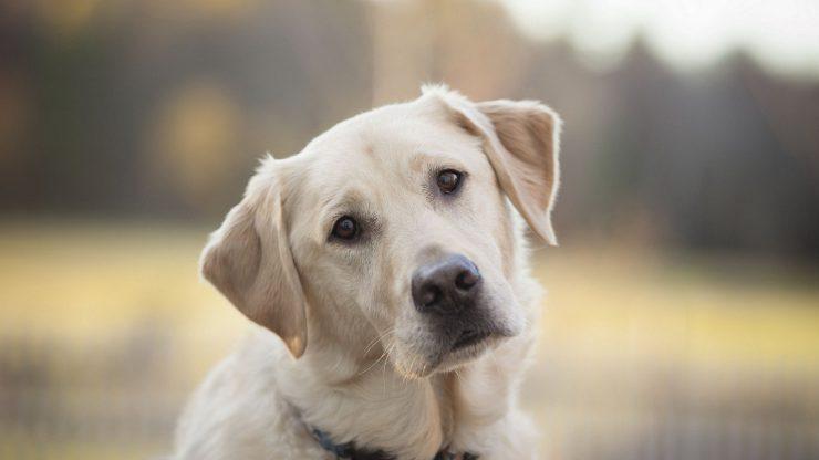 Какой корм нужен вашей собаке?