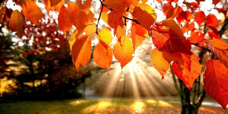 Стало известно о погоде в начале ноября