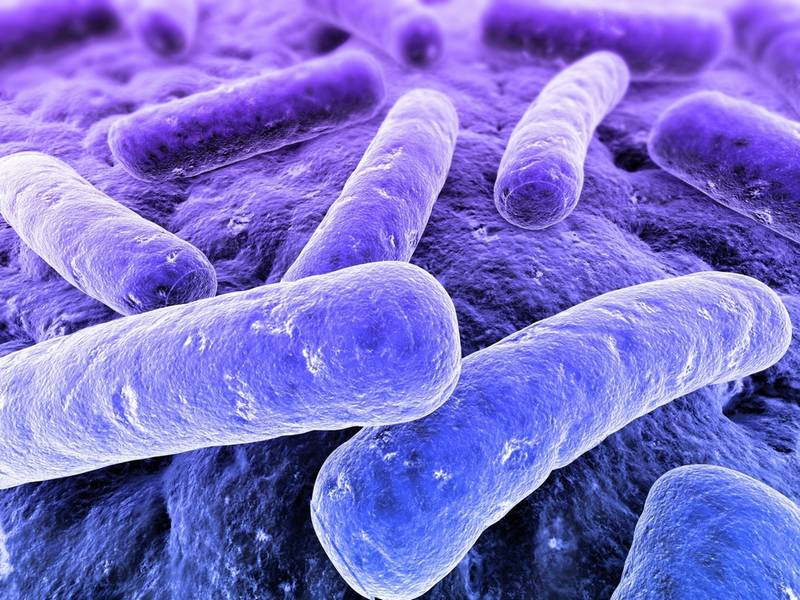 Подтверждена способность микробов и органических соединений выживать в космосе