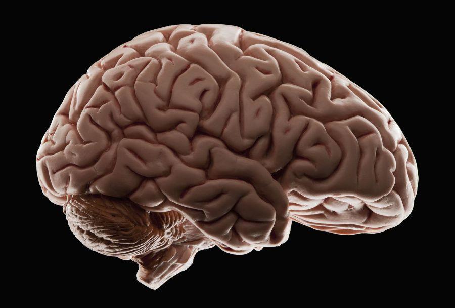 Стресс уменьшает размер мозга у людей зрелого возраста — ученые