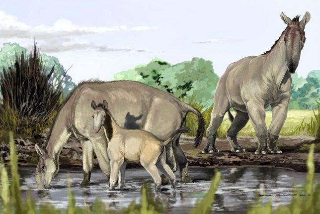 Вымирание млекопитающих в миллионы раз обгоняет их эволюцию и восстановление