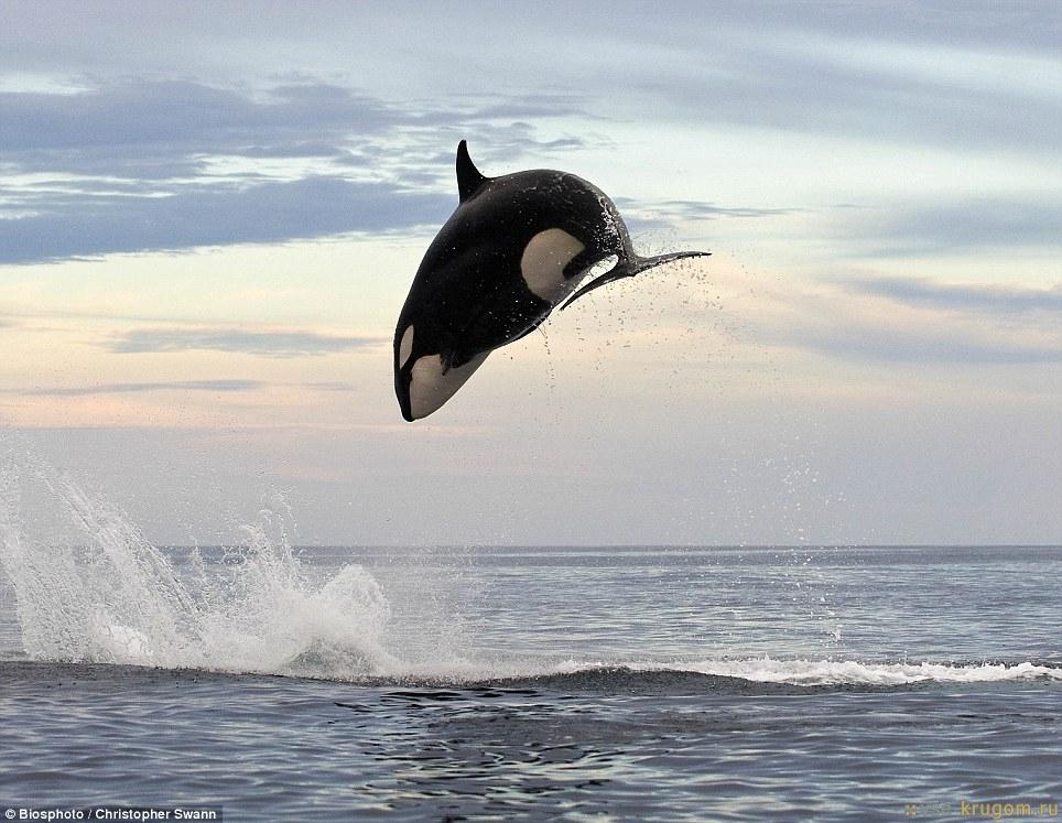 Вымирание животных на Земле не такое масштабное, как написали СМИ
