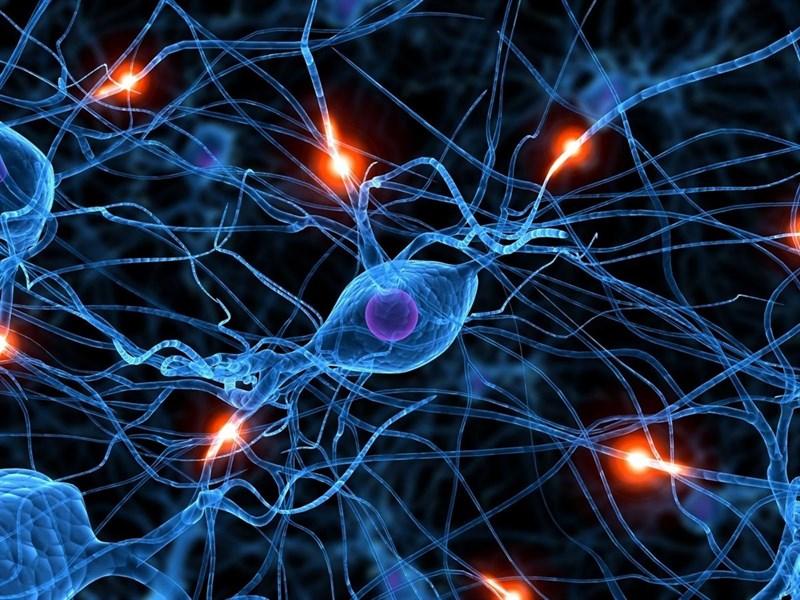 Ученые разгадали 125-летнюю тайну мозга