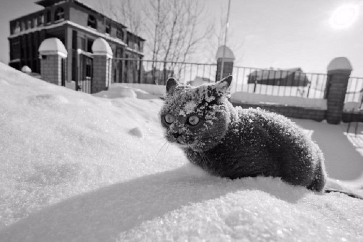На Украину надвигается морозная погода