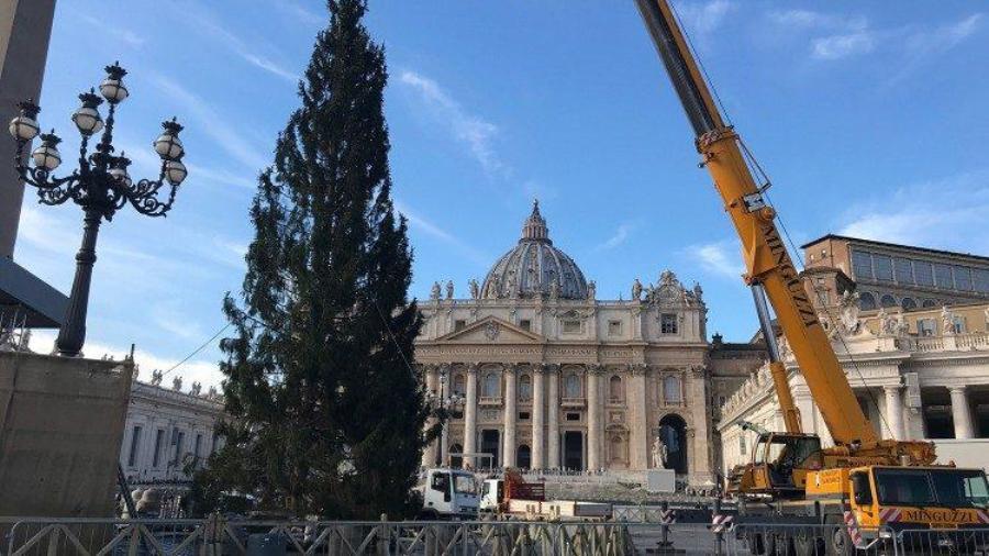 В Ватикане на площади Святого Петра установили 23-метровую рождественскую елку
