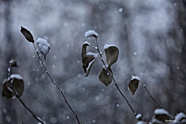Синоптик рассказал, когда в Украине выпадет первый снег
