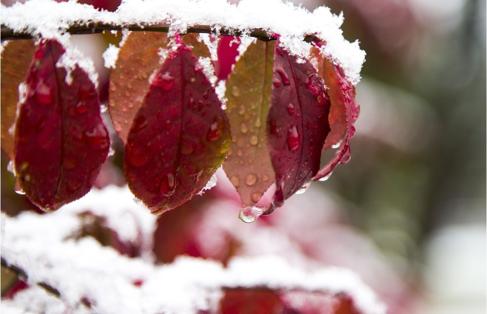 В Украине с 14 ноября ожидается снег