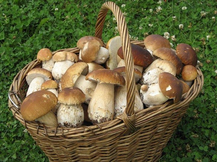 Названы целебные свойства грибов