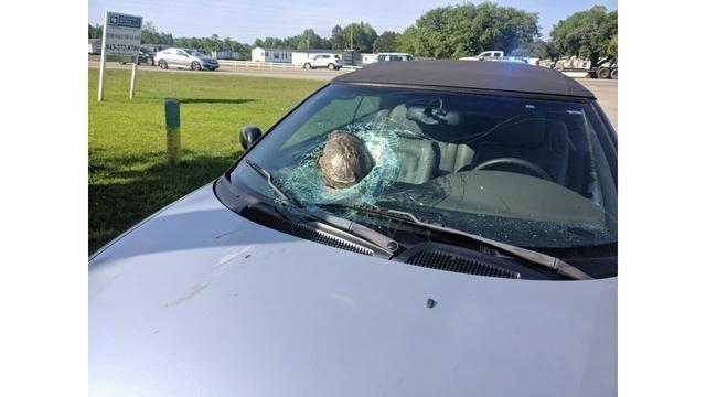 Как в США черепаха на бешеной скорости атаковала автомобиль