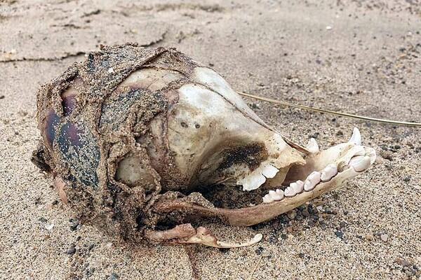 В Британии обнаружили череп странного существа