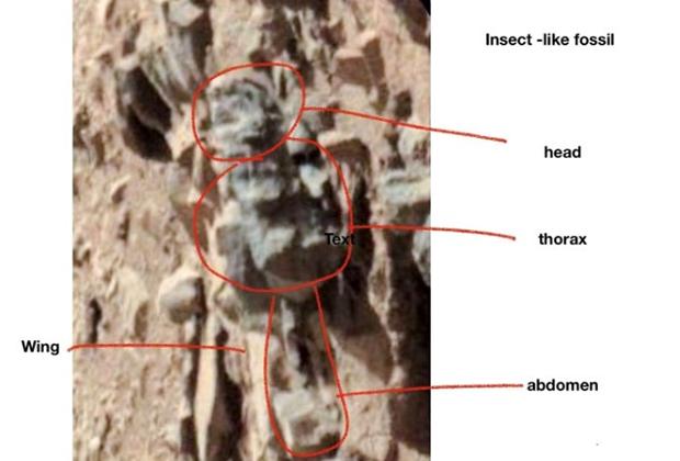 На Марсе нашли следы похожих на земных насекомых существ