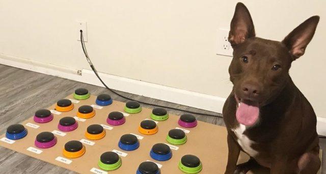 В США появилась первая говорящая собака