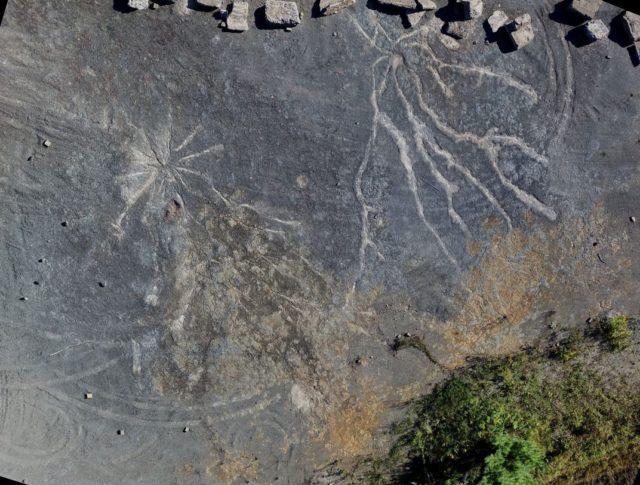 Найден лес возрастом почти 400 миллионов лет