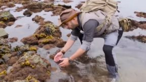 Ядовитого «убийцу собак» нашли на пляже в Австралии: фото