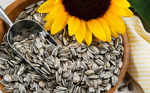 Особенности выбора семян подсолнечника