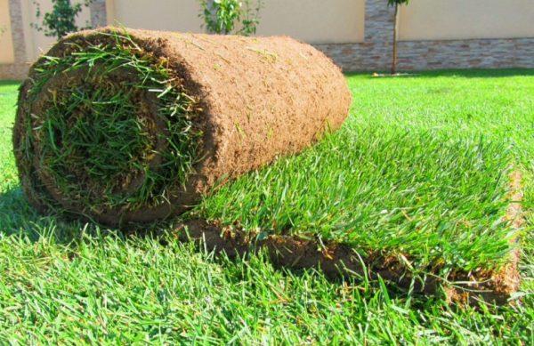 Качественный и очень универсальный рулонный газон Старк