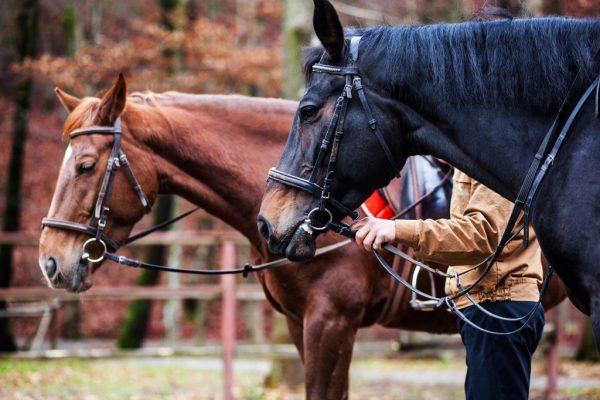 Обучение верховой езде и прогулки на лошадях в Закарпатье