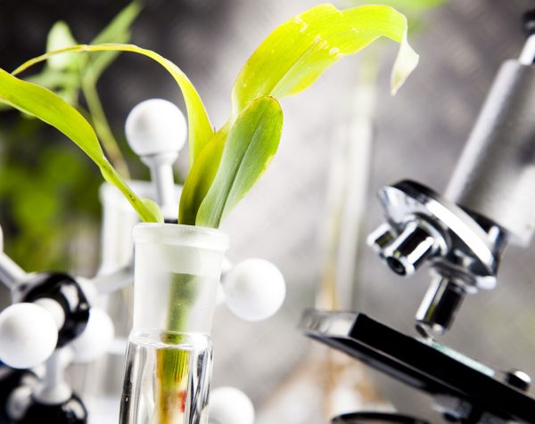 Точный и профессиональный лабораторный анализ растений