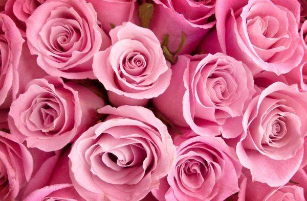 Быстрая доставка свежих цветов в СПб